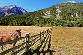 foto of log fence  - Headwaters National Park Krimml - JPG