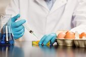 picture of yolk  - Food scientist injecting an egg yolk in petri dish at the university - JPG