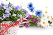 stock photo of flower pot  - blue campanula flowers in flower pot and other flowers