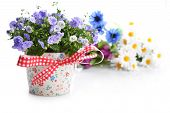 picture of flower pot  - blue campanula flowers in flower pot and other flowers - JPG