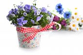 stock photo of flower pot  - blue campanula flowers in flower pot and other flowers - JPG