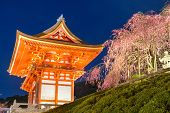 picture of night-blooming  - Kyoto - JPG