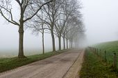 picture of row trees  - Country road in an endless rural landscape with a row of bare trees - JPG