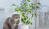 stock photo of scottish-fold  - Sad cat on the windowsill. She is bored.