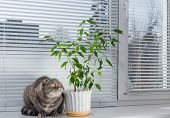 image of boring  - Sad cat on the windowsill. She is bored.