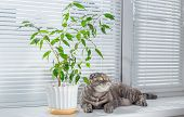stock photo of boring  - Sad cat on the windowsill. She is bored.
