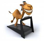 stock photo of camel  - Fun camel - JPG