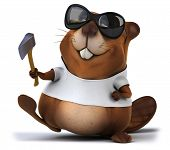 foto of muskrat  - Beaver with a white tshirt - JPG