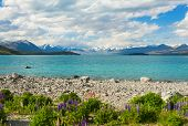 Постер, плакат: Beautiful incredibly blue lake Tekapo with blooming lupins on the shore and mountains Southern Alps