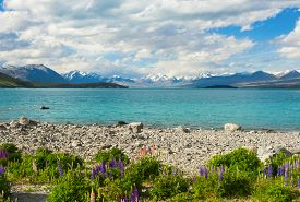 picture of incredible  - Beautiful incredibly blue lake Tekapo with blooming lupins on the shore and mountains - JPG