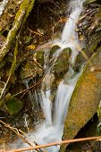 The Small Falls In A Spring Wood poster