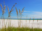 picture of sea oats  - Beautiful sea oats on pretty beach with ocean in distance - JPG