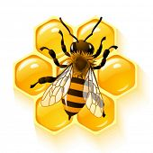 image of honey bee hive  - Vector bee and honeycombs - JPG