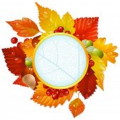 stock photo of glans  - Autumnal round frame with fall leaves - JPG