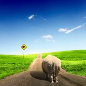 stock photo of fat lip  - Collage with big wild rhino walking on a road - JPG