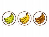 Banana Ripeness Vector Illustration. Green Underripe Bananas, Yellow And Brown Over Ripe. Cartoon St poster