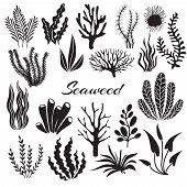 Aquarium Seaweeds. Underwater Plants, Ocean Planting. Vector Seaweed Black Silhouette Isolated Set.  poster