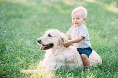 Little Child Playing With Labrador Retriever Dog Together In Wood poster
