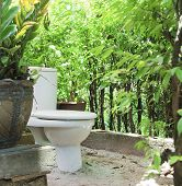picture of outhouses  - Outhouse toilet surround with plant likewise partition  used in Thailand - JPG
