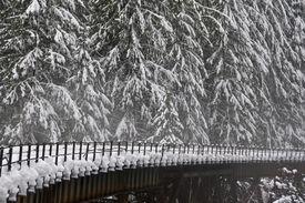 pic of trussle  - Northern Pacific Rail Bridge near Steven - JPG