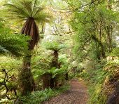 stock photo of grass area  - Te Urewera Treks - JPG