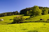 stock photo of feedlot  - Summer Landscape agriculture field with blue sky - JPG