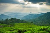 Beautiful fresh green tea plantation in Munnar, Kerala, India