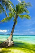 Beach on summer season picture with palm tree over clean blue sky and bluish water