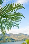 Fern leaves against blue sky in New Zealand