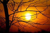 View through leafless tree on red sun in sunset