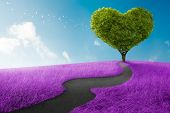 stock photo of ecology  - Heart shape tree in lavender meadow for love symbol - JPG