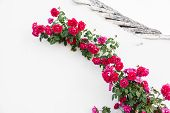 pic of climbing roses  - a branch of red roses crawling on a white wall in an italian village - JPG