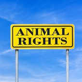 picture of animal cruelty  - Animal rights written on yellow road sign over blue sky - JPG