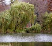Autumn Fall Park. Lake And Weeping Willow Tree.