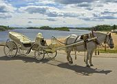 foto of great horse  - White horse with white carriage on bank of river in town Great Novgorod Russia - JPG