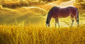 image of feeding horse  - Horse grazing in sun drenched field - JPG