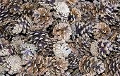 stock photo of cone  - many fallen pine cones make a pine cone background - JPG
