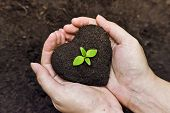 picture of planting trees  - hands holding fertile soil as a heart shape with a young green tree in the middle  - JPG