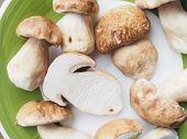 image of boletus edulis  - Boletus edulis aka penny bun or porcino mushroom or cep - JPG