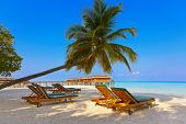 picture of beach-house  - Loungers on Maldives beach  - JPG