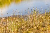 foto of marsh grass  - The beauty of autumn is magnified by the marsh grass growing on shore and the reflection of the colors of autumn in the waters of Lake Conestee near Greenville - JPG