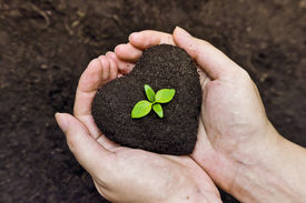 stock photo of sustainable development  - hands holding fertile soil as a heart shape with a young green tree in the middle  - JPG