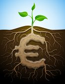 picture of bine  - Roots and tuber in form of euro symbol sprout - JPG