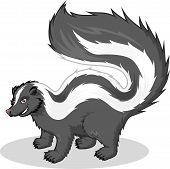 picture of skunk  - This image is a skunk in cartoon illustration - JPG