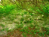 picture of hackney  - Forest web photographed at Hackney Marshes at Newton Abbot in Devon - JPG