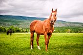 pic of beautiful horses  - Powerful beautiful horse standing on the field - JPG