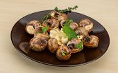 picture of escargot  - Escargot with rosemary thyme garlic and melissa - JPG