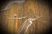 foto of cobweb  - Old wooden plank with cobweb as a background - JPG