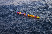 pic of lilas  - Colorful Baloons on the sea, near the coast ** Note: Soft Focus at 100%, best at smaller sizes - JPG