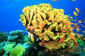 stock photo of color animal  - Colorful Coral Reef - JPG